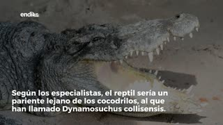 "Encuentran en Brasil fosil de un reptil ""triturador de huesos"""