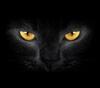 ¿Los gatos negros causan mala suerte?