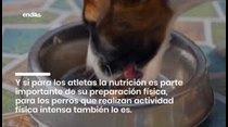 Consejos para practicar deporte con tu perro