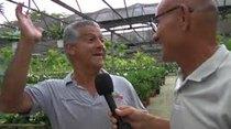 Douglas Candelario visita a Plantas de Caparra y nos habla de su historia.