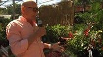 Douglas nos muestra los jardines premiados en el Festival de las Flores de Aibonito.