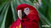 Alerta de la ONU: hasta un millón de especies podrían verse amenazadas