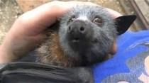 La reacción de un murciélago al ser acariciado