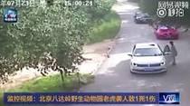 Tigre ataca a mujer en safari