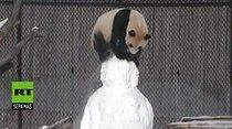 Panda juega con la nieve