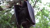 ChiquiNatu la naturaleza nos llama. Murciélago cerca de Rio en San Sebastián. PiccoloMondoPR