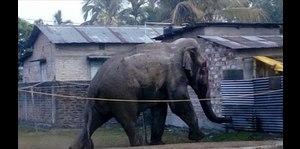 Pánico por elefanta salvaje en aldea de India
