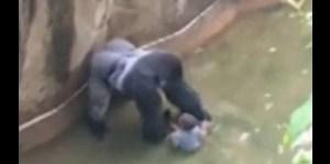 Sacrifican a gorila para salvar a niño en zoológico de Ohio
