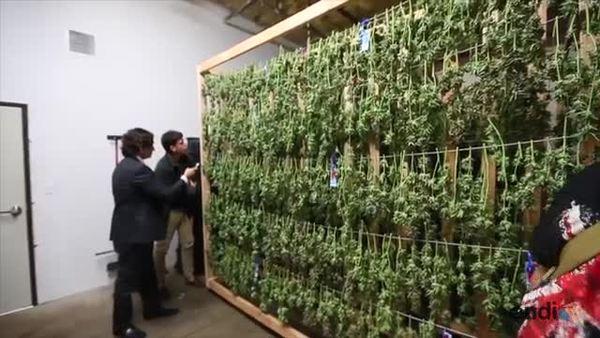 Dueños de dispensarios de marihuana hablan sobre su negocio