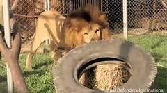 Rescatan cientos de animales de circos
