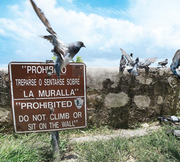 ¿Las palomas siguen a su líder?