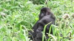 Amenazada 60 por ciento de los primates