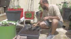 Crece la agricultura casera