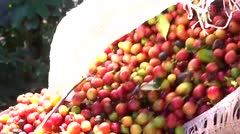 Apuestan a la industria del café
