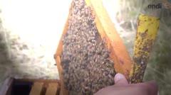 Producción de miel en Puerto Rico