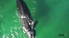 Resuelven el enorme misterio de las ballenas