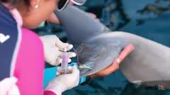 Científicos boricuas entre delfines y manatíes