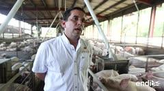 La industria porcina comienza a normalizarse