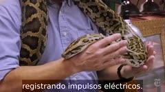 Los secretos de cómo se arrastra una serpiente