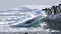 """Científicos descubren una """"supercolonia"""" en la Antártida"""