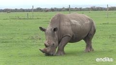 Muere en Kenia el último rinoceronte blanco