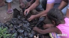 El guáimaro, un árbol contra la desnutrición y el cambio climático