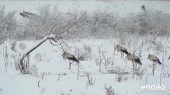 Residentes en Bulgaria dan albergue del frío a cigüeñas blancas