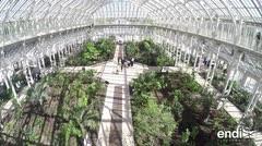 Reabre el invernadero con las plantas más raras del mundo en Londres