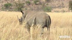 Mueren once rinocerontes en un parque nacional de Kenia