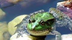 La ciencia detrás de un salto de rana