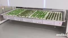 Compañía americana lista para vender alimentos cultivados por robots