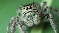 Cómo hacerle a una araña un examen de la vista