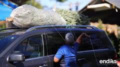 Frenesí boricua por los árboles de Navidad