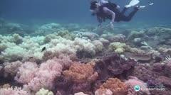 ¿La Gran Barrera de Coral es ahora más resistente?
