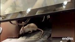Insólito: lanzan ratones vivos en medio de plenario en el Congreso colombiano