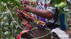 Uno de los principales productores de café está en quiebra