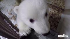 Esta osita polar enternece al mundo