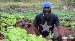 Así progresan los negocios y agricultores en Vieques