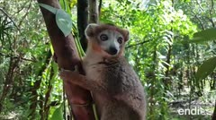 La intensa lucha de una comunidad para preservar un animal en peligro de extinción