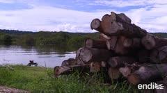 Terrible deforestación transforma la Amazonía en un polvorín