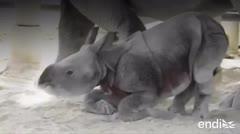 Esta bebé rinoceronta conmueve al mundo tras nacer de una forma diferente