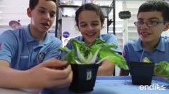 Estudiantes buscan llevar la lechuga puertorriqueña al espacio