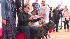 Premian a una perra como la mejor intérprete canina en Cannes