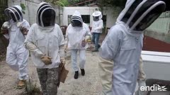 Los apicultores boricuas piden ayuda