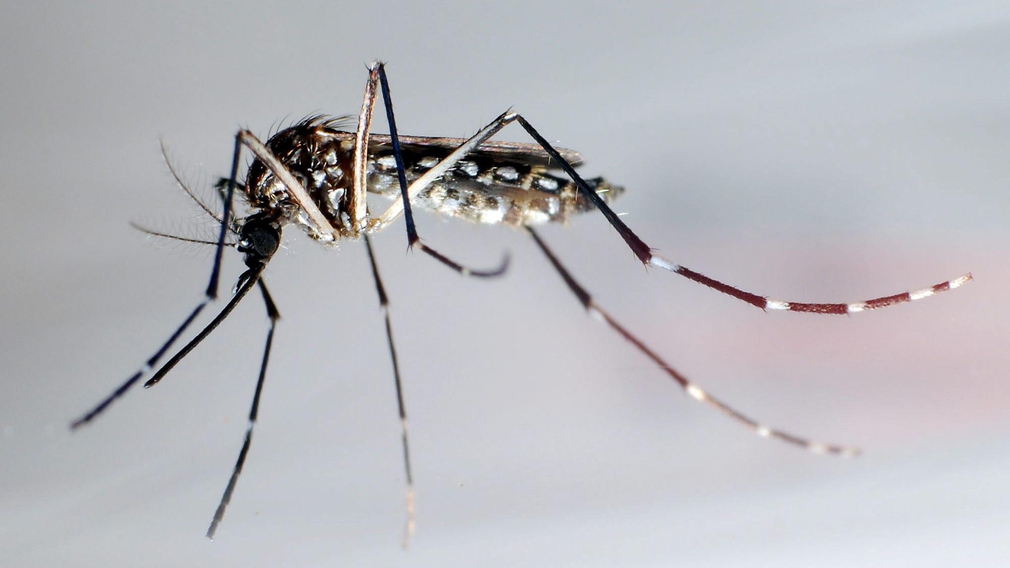 El dengue amenaza con volverse en una epidemia en República Dominicana
