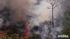 Bajo presión internacional, Bolsonaro ayudará a la Amazonía