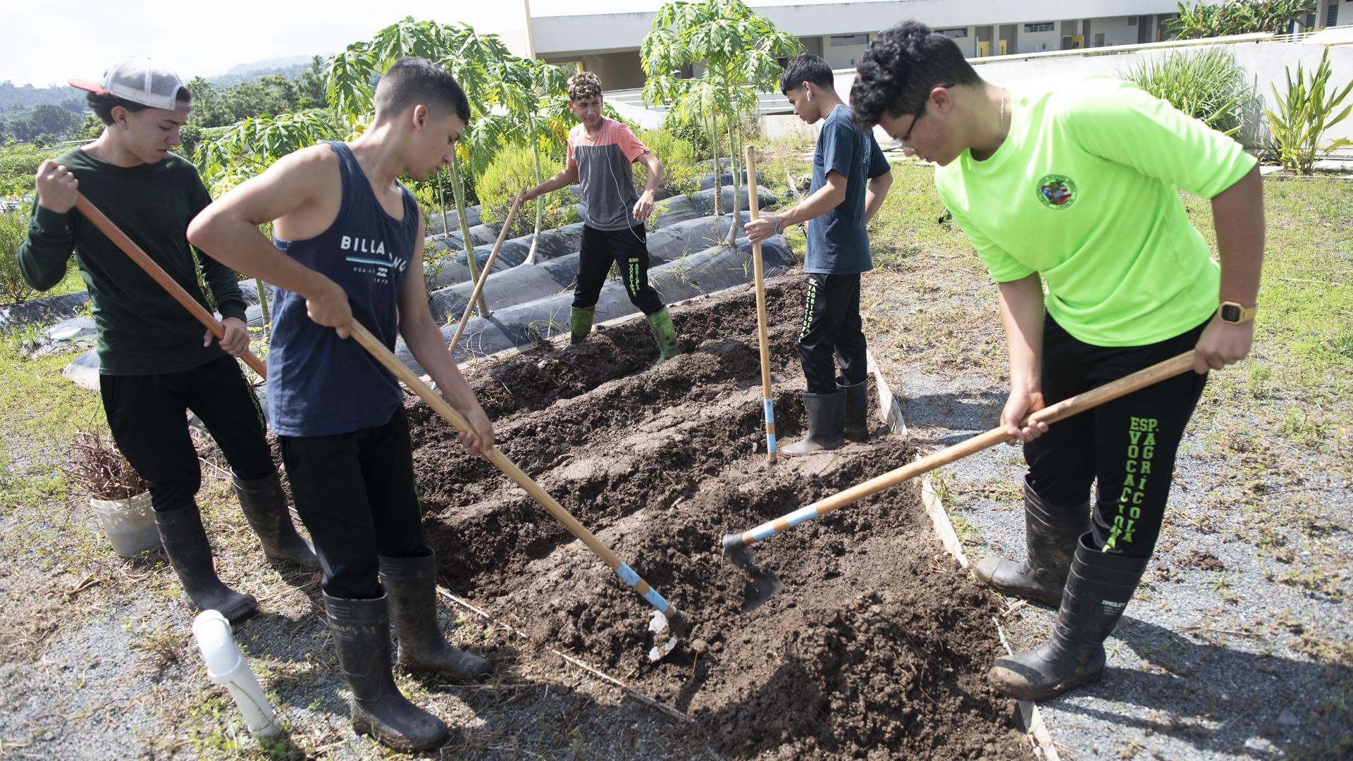 """Así crece una cepa boricua de jóvenes agricultores: """"La agricultura nos da vida"""""""
