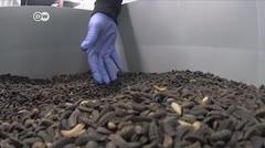 Alimento para animales: ¿insectos en vez de soya?