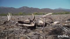 Mueren 106,000 animales en Chile por una dura realidad climática