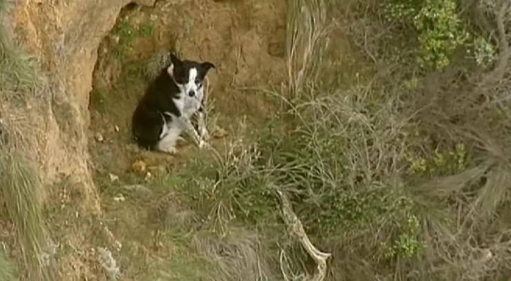 El gran rescate de Jimmy, un perrito atrapado en un precipicio